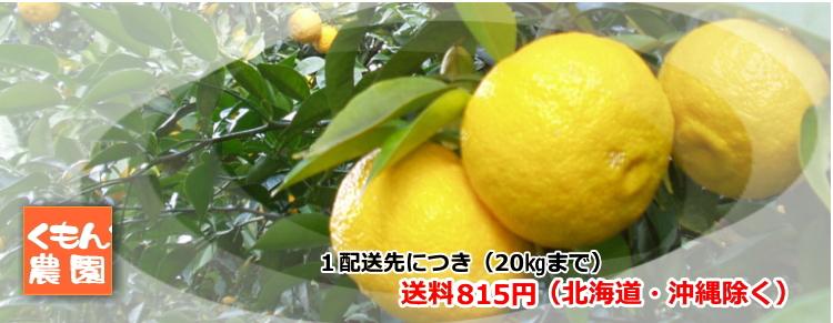 柚子、銀杏の通販 くもん農園