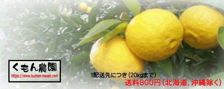柚子と銀杏の通販