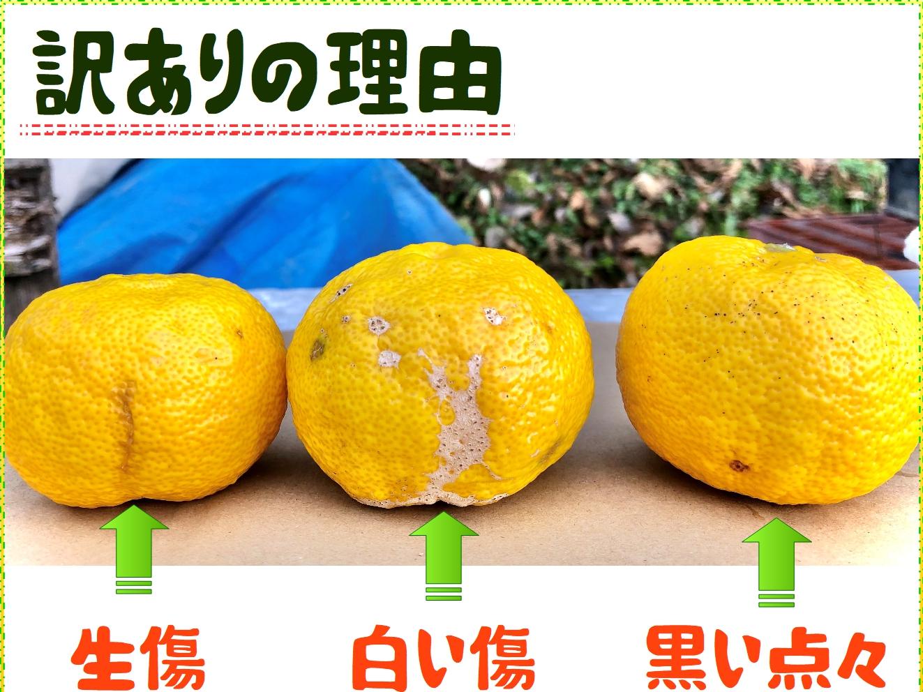 yuzu049.jpg